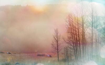 Adieu Muster – wieso Du sie dringend loslassen musst und wie der erste Schritt aussieht